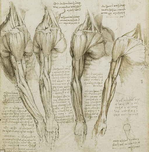http://www.intriguing-history.com/wp-content/uploads/2013/04/leonardo-da-vinci-drawings-Google-Search.png