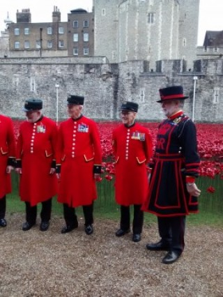 Tower of London Poppies Pictures to Download